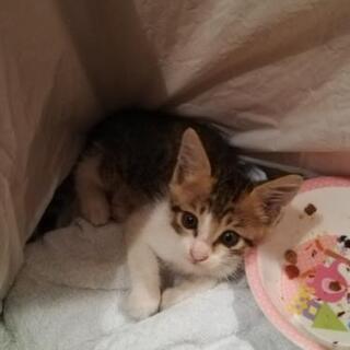 子猫の里親募集 − 栃木県
