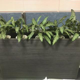 観葉植物付き飾り棚