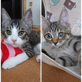 可愛い子猫2匹います❤️