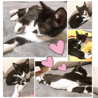 黒白猫♀推定3ヶ月