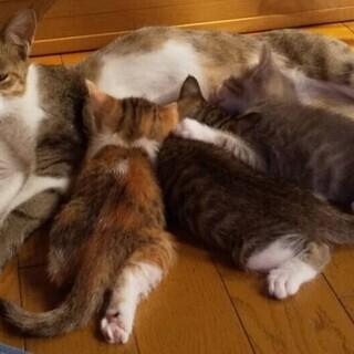 子猫と母猫の里親さま募集します!
