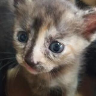 ⭕急募⭕メス子猫の里親さん募集