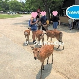 🌼 奈良公園の散策コン 💛 関西の恋活&友達作りイベントを開催中!🌼 - 奈良市