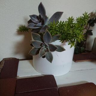 ポット植え観葉植物参考ページ