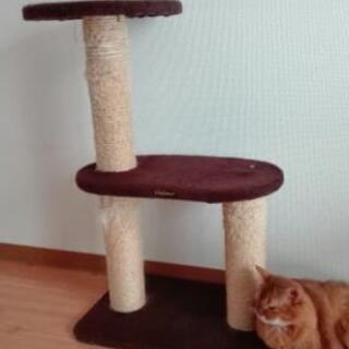 猫タワー(キャティーマン)