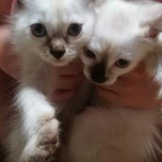 6月産まれのメス猫2匹