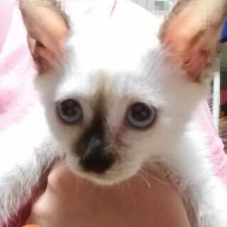 6月産まれのメス猫