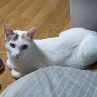 猫の保護活動をしていて現在5匹の里親様を募集しています。