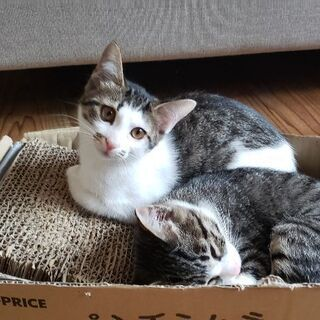 3ヶ月メス猫里親募集中♪《8月21日現在》
