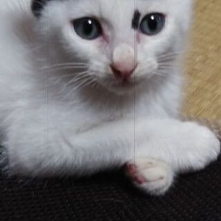 目の綺麗な男の子(2ヶ月)