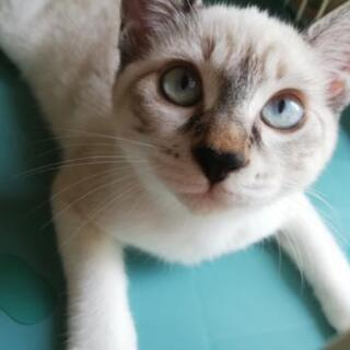 急募! 青くて小粒な目のシロちゃん