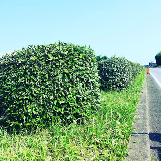 道路草刈り 刈り込みの清掃