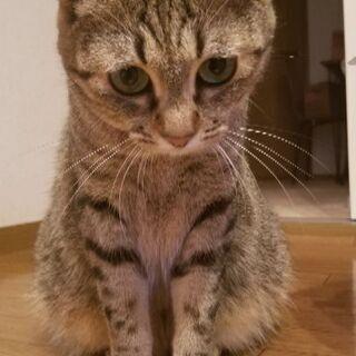 可愛いメス猫です