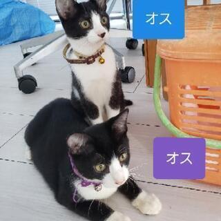 😸里親募集😸子猫2匹「生後4ヶ月」♂️♂️
