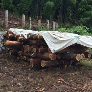 杉の丸太材、木工、薪などにいかがでしょう