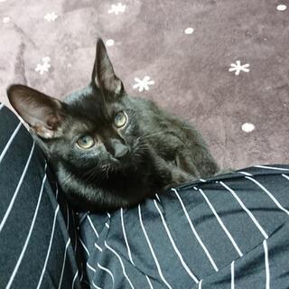 子猫 黒猫 生涯、大事にして下さる方のみ。
