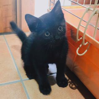 ☆美形な真っ黒仔猫☆