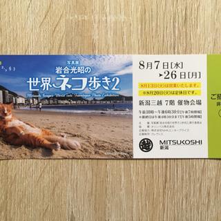 世界ネコ歩き2 招待券