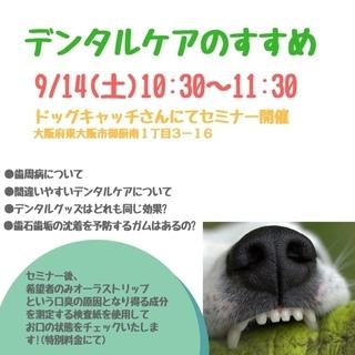 東大阪市のドッグキャッチさんにて『デンタルケアのすすめ』セミナー