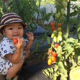 【明石太寺体験ファーム】8/31にお子様向けの農業体験会を実施い...