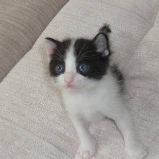 生後3~4週位(現在380g)子猫