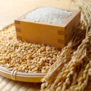 先日収穫❣️餅米。10キロです。30キロはお買い得7袋のみ