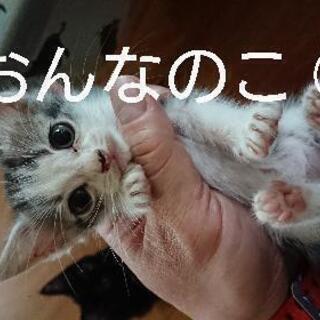 子猫の里親さん募集 - 坂戸市
