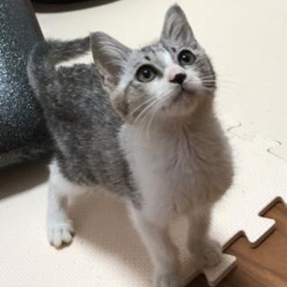 生後3ー4ヶ月の子猫