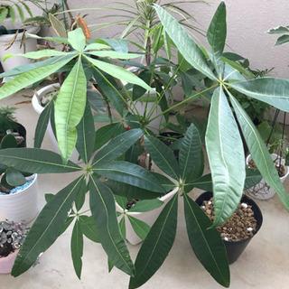 🍀観葉植物、今夏ラストのまとめ売りset🌟+おまけ‼️