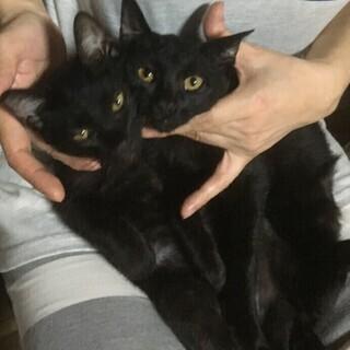 黒猫ちゃん姉妹の里親さん募集(仮名:★キキ♀ララ♀★)