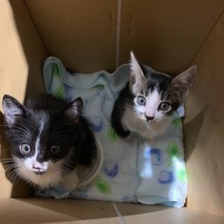 捨て猫保護してます。今月中。愛らしい猫達
