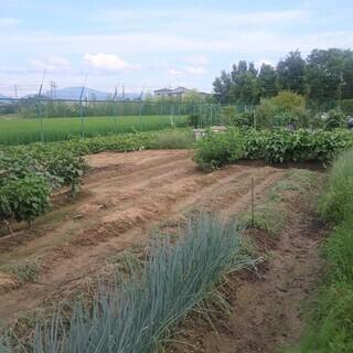 農園で自分で野菜を栽培しませんか(農地レンタル)