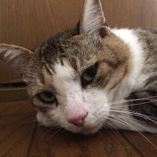 怪我を負わされた野良猫