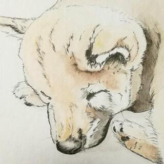 ペットや好きな動物の絵はいかがですか?🐶