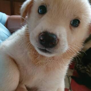 保健所で出産・元気な子犬白①