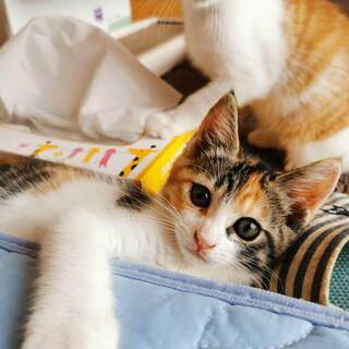 とてもかわいい子猫 後2匹