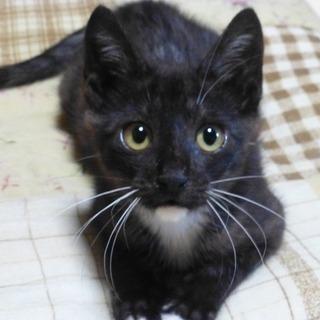 生後1か月半から2か月くらい 子猫(オス) 里親さん募集