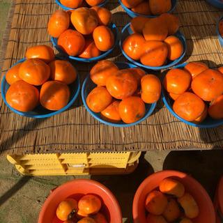 柿の試食販売のお仕事です。
