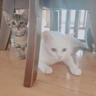 子猫(2ヶ月くらい)オスメス 里親募集