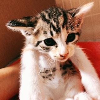 美人ちゃん猫保護しました。約1ヶ月☆