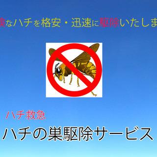 【即日対応・安心明朗会計】危険なハチを格安・迅速に駆除いたします...