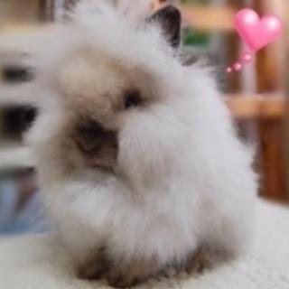 もふもふウサギの里親を募集しています