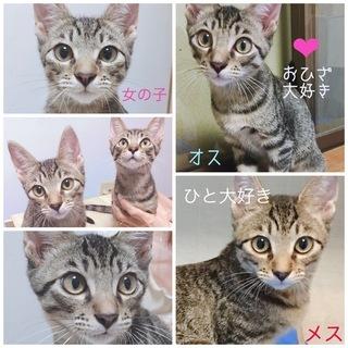 キジ猫♂♀4か月