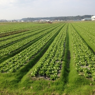 【農業】自然の中で野菜や花の収穫・出荷作業