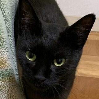 推定1才未満の黒母猫と7/4生まれの子猫