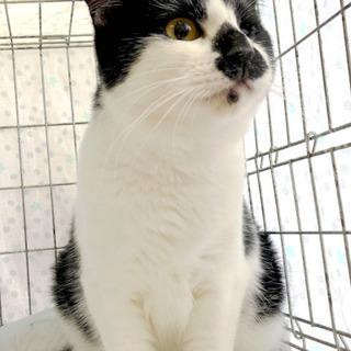 9月29日(日) 猫の譲渡会 名古屋市港区 社会福祉法人 中部盲...