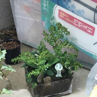 🍀ジブリ風、ミニ植物4種♪