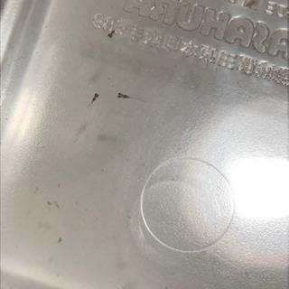 白メダカ 20〜30匹 稚魚