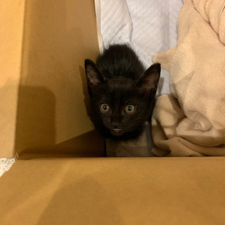 生後1ヶ月 オス猫 雑種