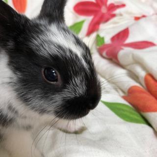 ジャンプ力抜群で人懐っこい子ウサギです